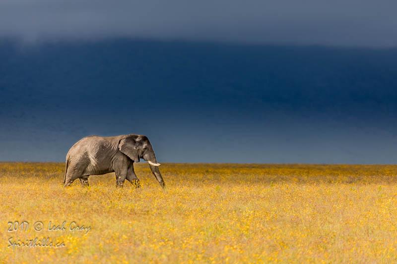 Ngorongoro Elephant